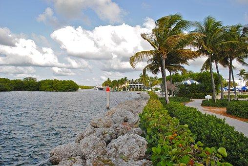 Palm Tree, Waterway, Palm, Travel, Resort, Hotel