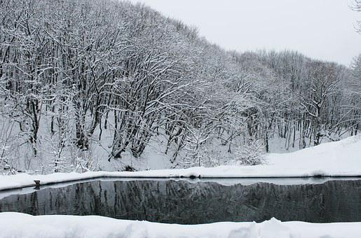 Forest, Winter, Snow, Winter Forest, Nature