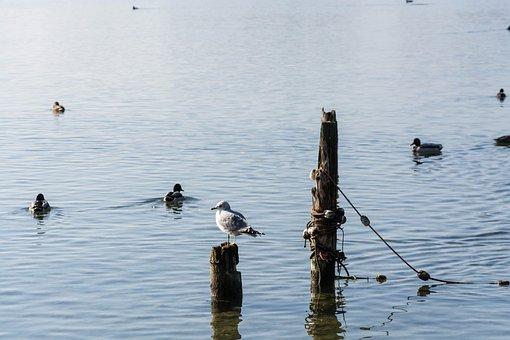 Lake, Gmunden, Traunsee, Mirroring, Fog, Nature, Water