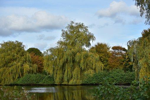 Autumn, Trees, Golden Autumn, Autumn Colours, Yellow