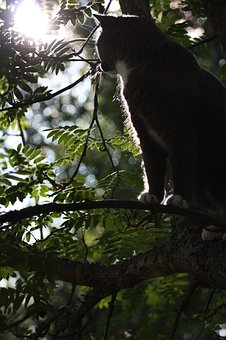 Cat, Titus, Animals, Feline, Tree, Cat In Tree, Sun