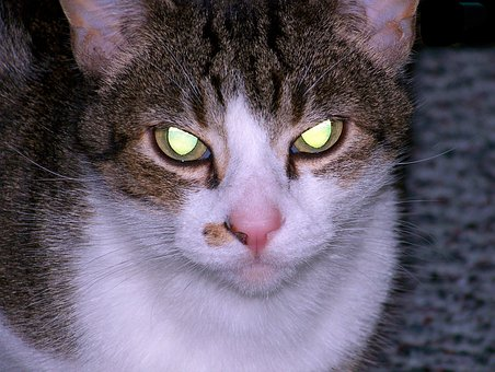 Cat, Evil, Eyes, Glowing, Halloween, Horror, Creepy
