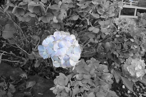 Last, Blue, Flowers, Nature, Seasons, Background, Macro