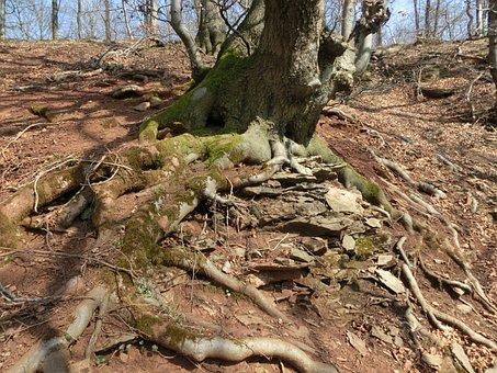 Forest, Mountains, Moss, Schaumburg, Weser Uplands