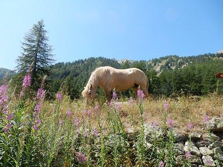 Horse, Pasture, Prato, Mountain, Freely, Palomino