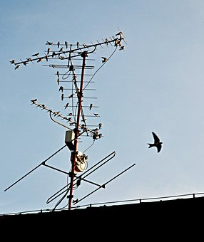 Autumn, Swallows, Before Departure, Antenna, Roof