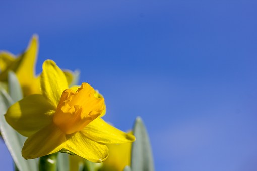 Easter Lilies, Easter, Blue Sky, Spring, Flower