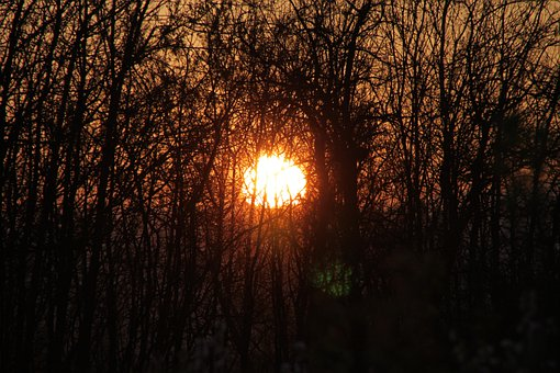Branches, Evening, Sun, Sunset, Through, Trees, Nature