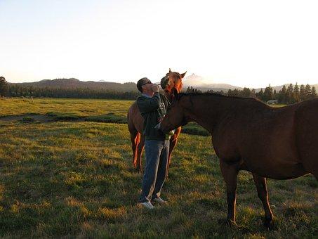 Black, Butte, Horse, Pastoral, Horses, Animal, Stallion