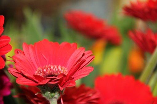 Tanning Ara, Flowers, Flower, Red