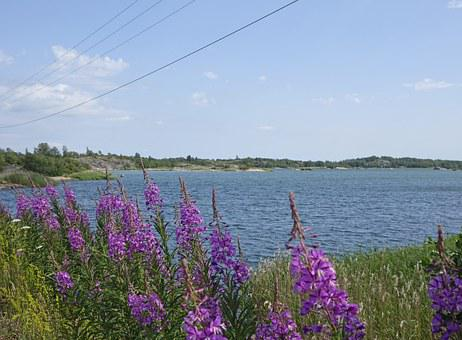 Flowers, Summer, Lake, Landscape, Aland Islands