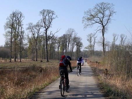 Czech, Cyklo, Trees, Forest, Dyje, Moravia, Nature