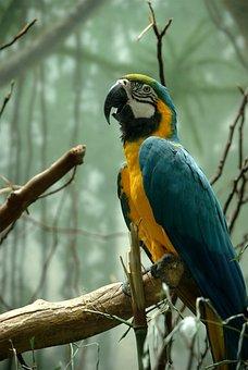 Macaw, Bird, Fly, Wings, Feather, Wildlife, Beak, Wild
