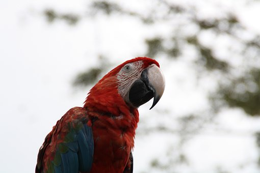 Macaw, Parrot, Bird, Fly, Wings, Feather, Wildlife