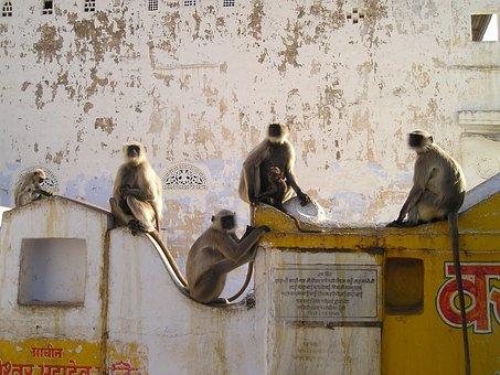 India, Ape, Ape Horde