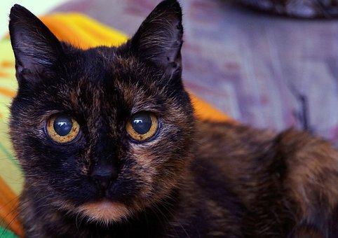 Cats, Dachowce, A Normal Cat, Pet, Charming, Cat