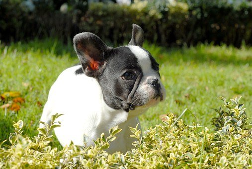 Puppy, Dog, Pet, Canine, White, Domestic, Adorable