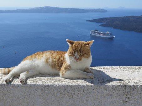 Santorini, Cat, Cruise, Mediterranean, Greece