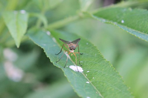 Close-up, Deer Flie, Flies, Horsefly, Plant, Sitting