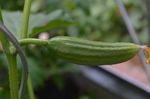 Cucumber, Vegetables, Snake Pickle