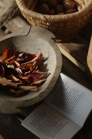 Autumn, Red, Leaves, Mood, Sonnet, Still Life