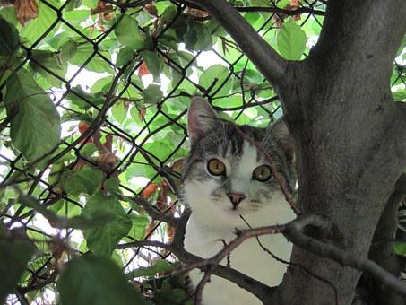 Cat, Curious, Adidas, Attention, Domestic Cat, Outdoor