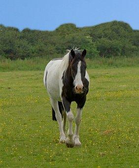 Horse, Animal, Beautiful, Pinto, Black, White, Blue