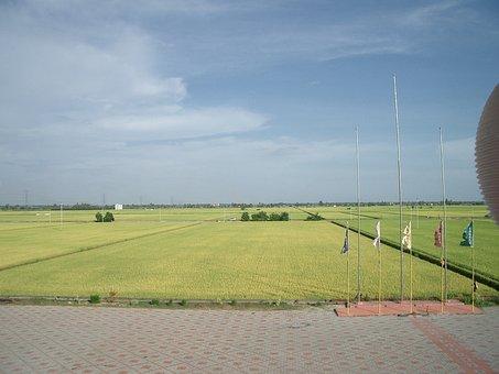 Padi Field, Fields, Greenery, Countryside, Landscape