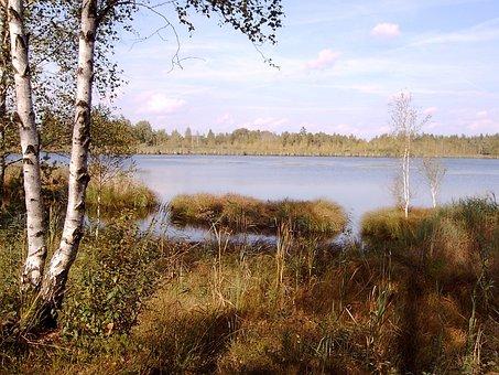 Wurzacher Ried, Moor, Lake, Birch, Nature Reserve