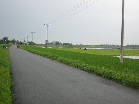 Land, Water, Padi