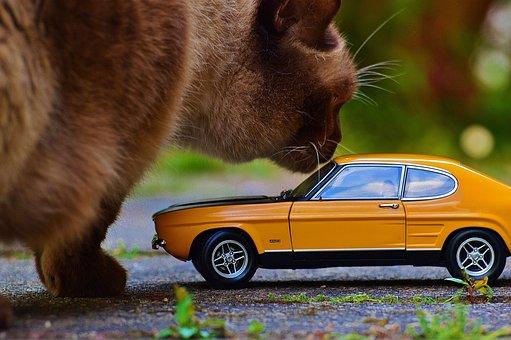 Cat, Giant, Auto, Capri, Ford, Model Car, Oldtimer