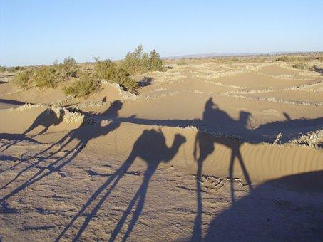 Sahara, Morocco, Desert, Barren, Sand, Hot, Camels
