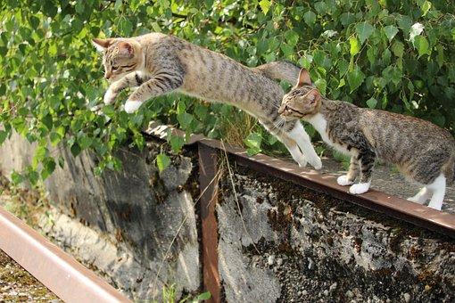 Cat, Kitten, Cat Baby, Jump, Young Cat