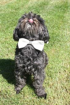 Funny Pictures, Dog, Wedding, Animal