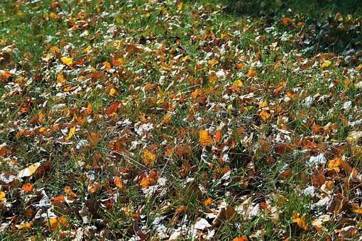 Leaves On Lawn, Lawn, Green, Grass, Leaves, Autumn