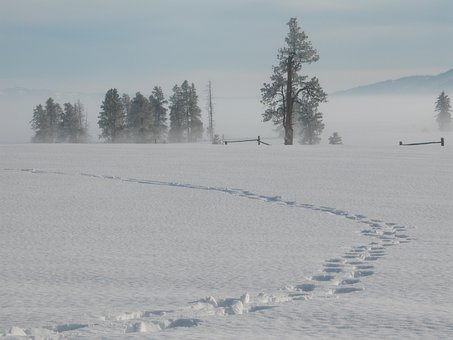 Snow, Winter, Tracks, Idaho, Nature, Landscape