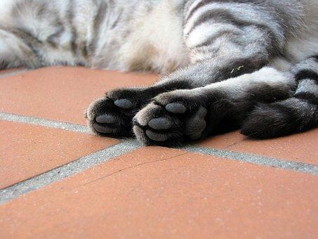 Cat, Paws, Tabby, Feline, Foot Pads, Pet
