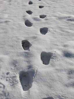Footprints, Snow Prints, Snow, Winter, Tracks