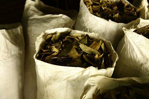 Nepalese, Cinamon, Leaves