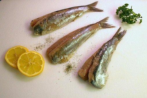 Maties, Herring, Fish, Eat, Food, Edible