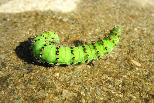 Caterpillar, Green, Nature, Close Up, Insect, Live