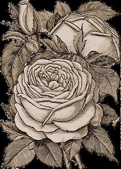 Flowers, Transparent, Sepia, Roses, Bouquet, Plant
