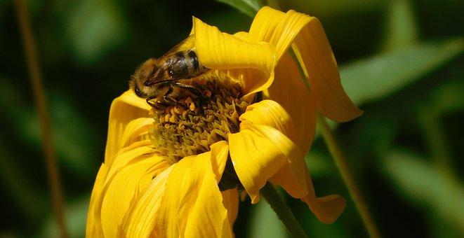 Bee, Bee On Flower, Hard Working, Work Diligently