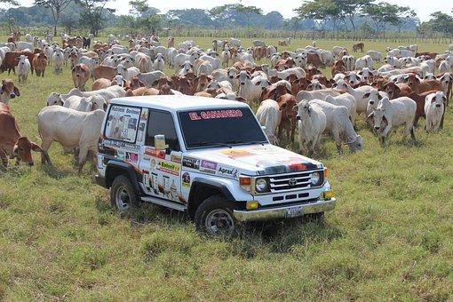 Veterinary, Rancher, Landscape, Livestock, Bovine