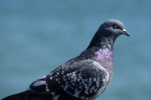 Dove, Street Deaf, Bird, Animal, Feather, Animal World