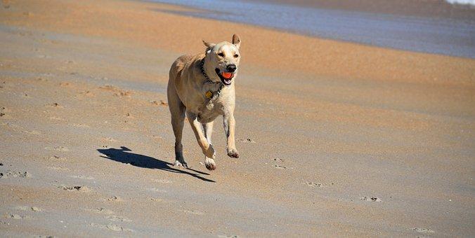Dog, Fetching Ball, Beach, Pet, Animal, Running, Active
