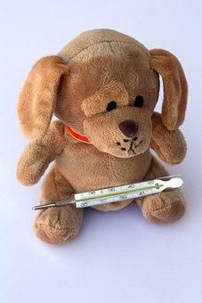 Teddy, Dog, Stuffed Animal, Ill, Injured, Fever