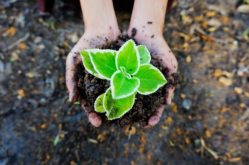 Seedling, Soil, Green, Plant, Ecology, Plant In Hand