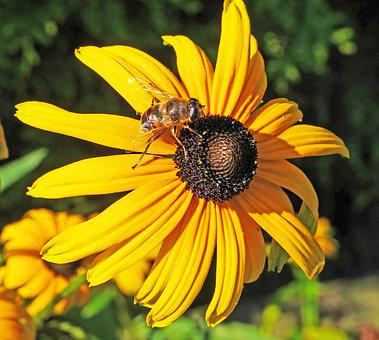 Summer Flower, Shrub, Blossom, Bloom, Bee, Honey Bee