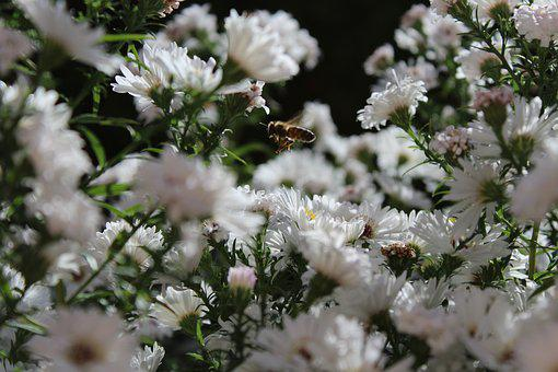 Bee, Bee In The Approach, Insect, Animal, Plant